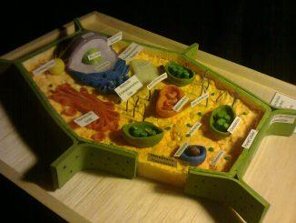 celula-vegetal3