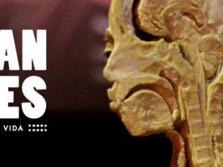 human-bodies-anatomia-de-la-vida